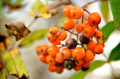 Jak udělat podzimní věnec | Podzimní dekorace
