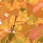 Jednoduché dekorace ze suchých listů