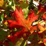 Jak udělat podzimní obrázek