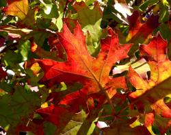 obraz z podzimní dekorace