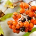 Jak vyrobit podzimní věnec