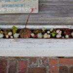 Sušené květiny v truhlíku